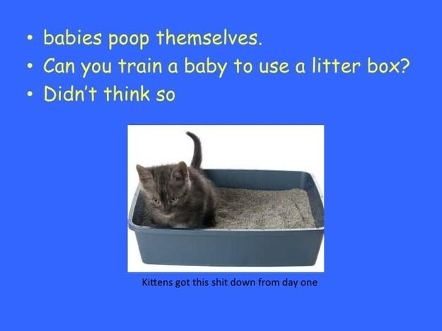 Why Cats Are Better Than Babies