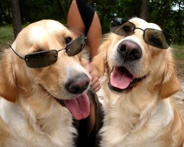 Coolest Dogs in The Hood