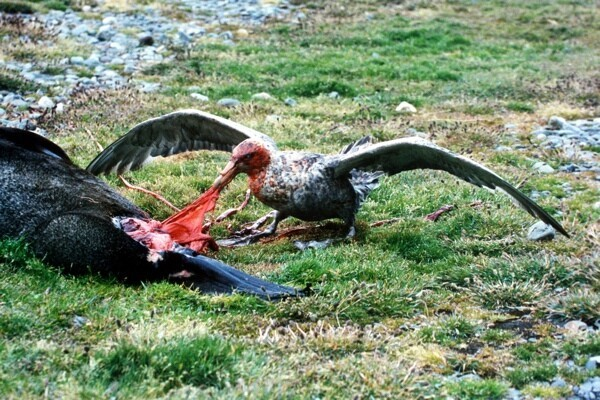 Shockingly Creepy and Bloodthirsty Birds
