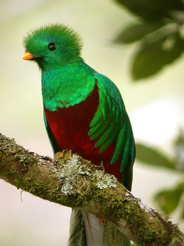 10 Most Beautiful And Unusual Looking Exotic Birds.