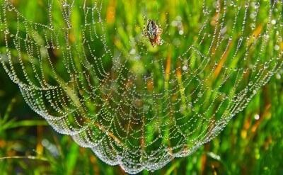 Spider Webs and Water Drops = Natures Art Installations