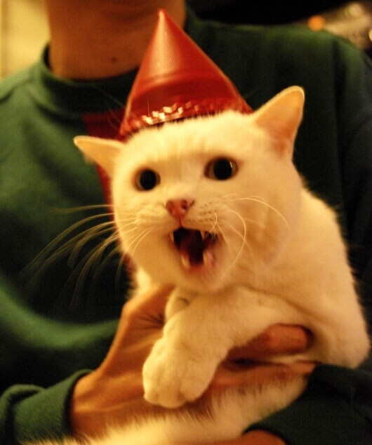 Birthday Celebrating Kitties!