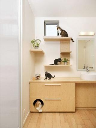 Cats Dream House