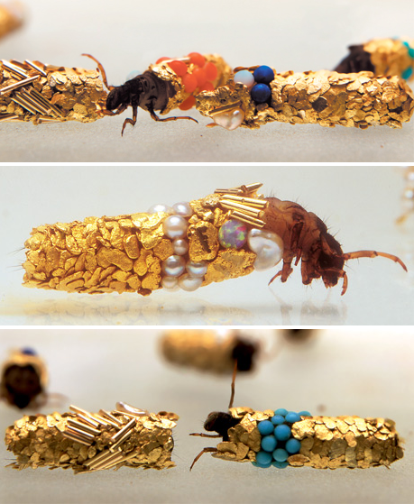 Fancy Insects, Watch These Bugs Dress Themselves in Jewelry