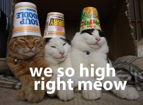 We So High Right Meowww