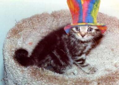 Fancy Cats, Awesome Hats