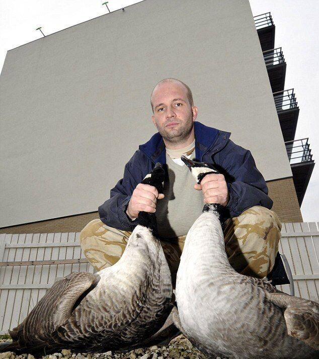 Migrating Geese Find Gray Wall To Be a Challenging Obstacle