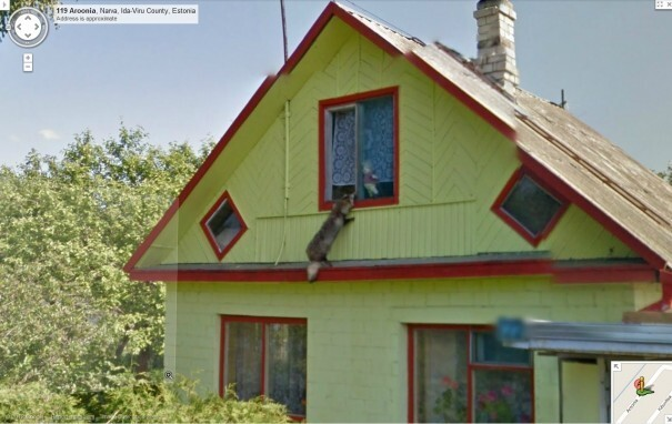 Top 10 Animals Found in Street View