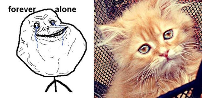 Cats As Rage Faces