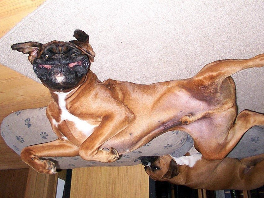 Upside Down Dogs