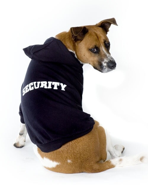 Coolest Dogs In Awesome Hoodies!