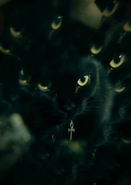 The History And Creepy Images Of Black Cats. Warning: Some are pretty disturbing!