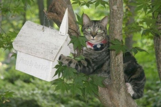 Cat in Bird House