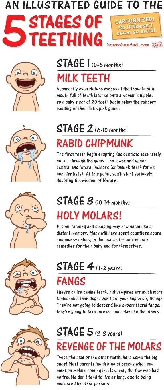 Stages of teething