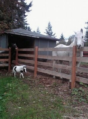 Big Difference! Mini Horse Einstein