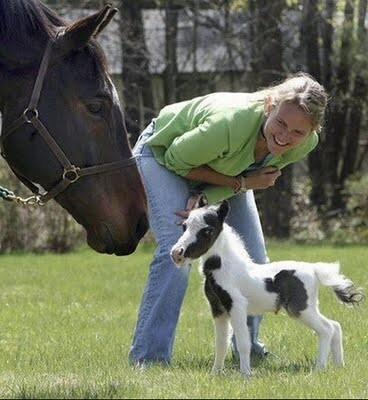 Mini Horse, Regular Horse
