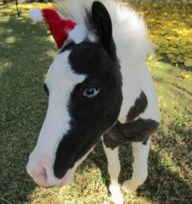 Mini Horse Einstein Christmas Hat