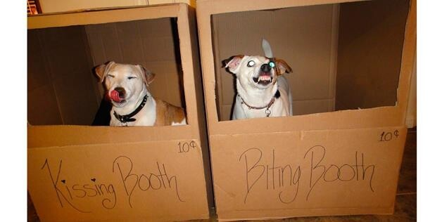 Kissing Booth, Biting Booth