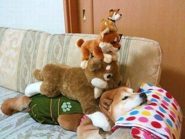 Under this stack of stuffed animals: