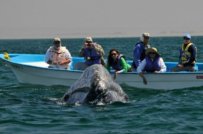 Whale Watchers Get A great View