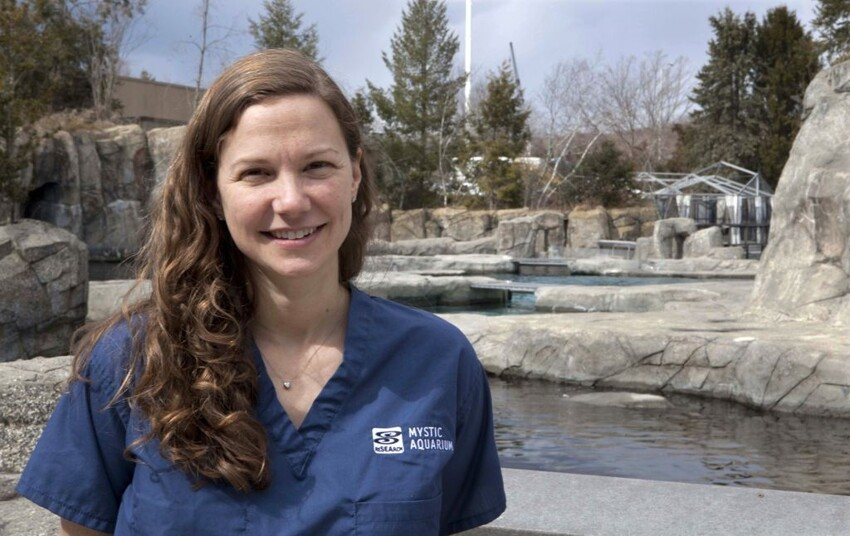 Mystic Aquarium veterinarian Allison D. Tuttle