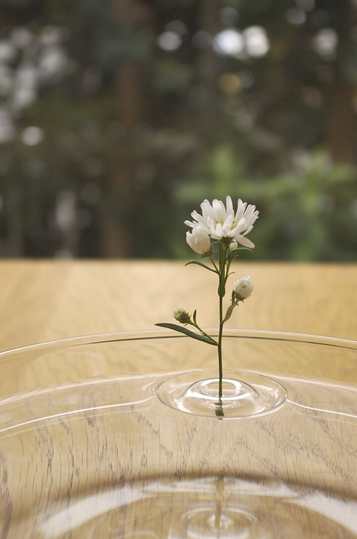 Flower Sits In water
