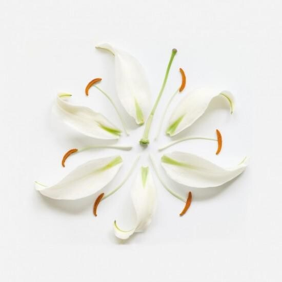 """Exploded Flowers"", Creative Pictures of Dissembled Flowers"