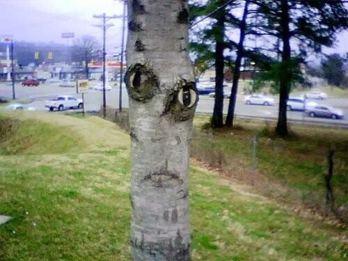 This tree definitely has a face
