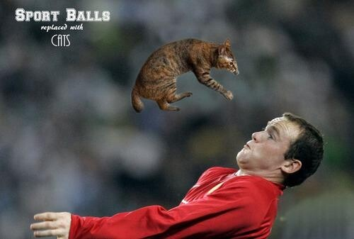 Sport Balls Photoshopped Out and Replaced with Cats