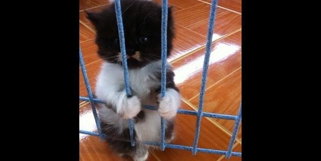 Cat caged