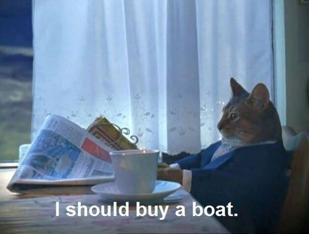 Sophisticated Cat Finally Bought a Boat