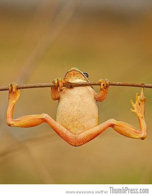 Toad Stretching