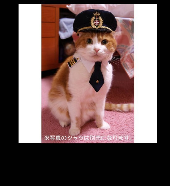 Cats in Captain Hats is the new 'In Thing'.
