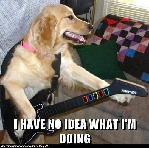 Meme Watch: Dogs Saying 'I Have No Idea What I'm Doing'