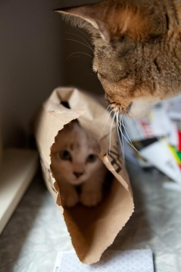 These Kitties Need Some Hiding Lessons.