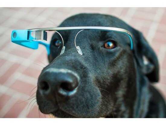 The New Doggle Glasses