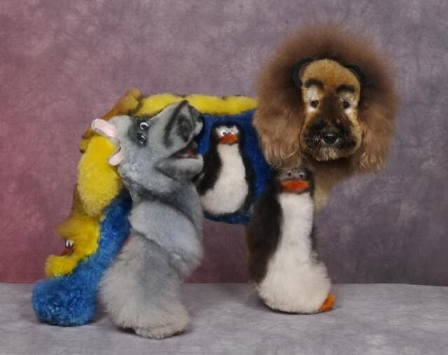 Dogs Groomed to Blow Your Mind