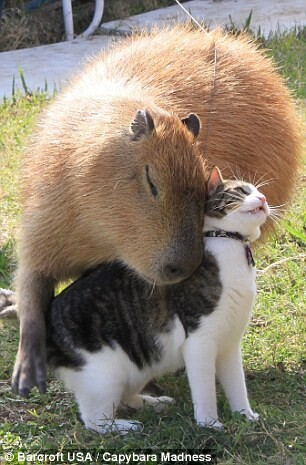 Gary's owner adopted him after falling in love with capybara's during a trip to Venezuela