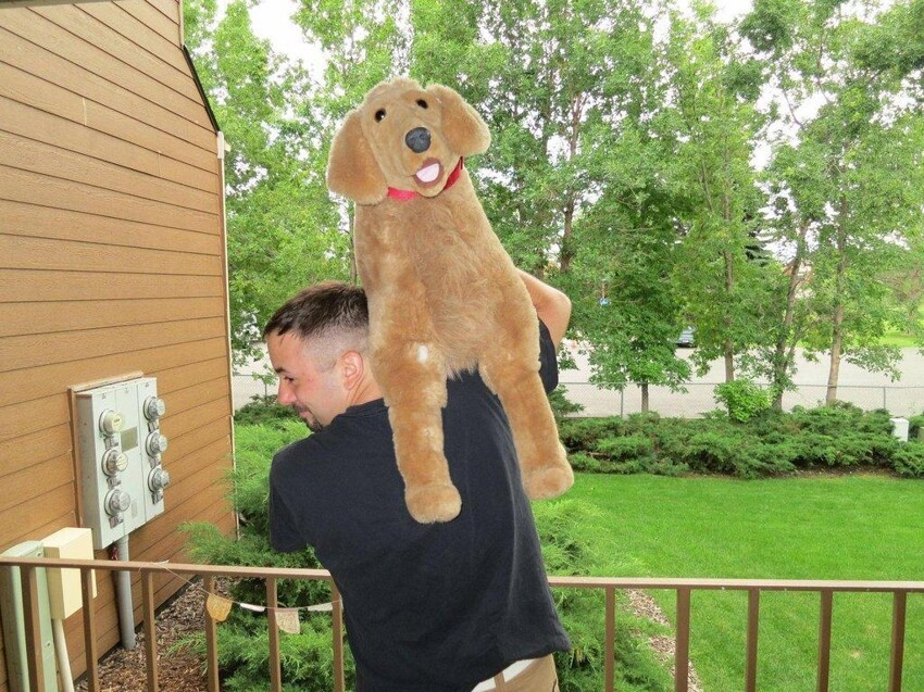 Guy Introduces You to His Roommate's Stuffed Dog