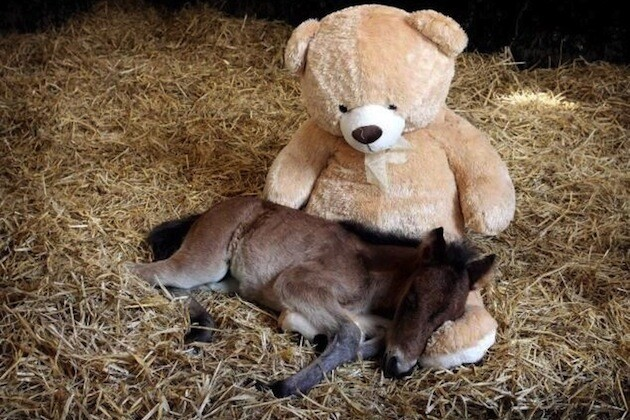 11 Animals With Their Teddy Bears
