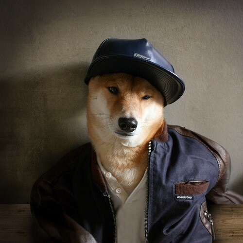 Menswear Dog Will Keep You Up on the Latest Fashion Trends