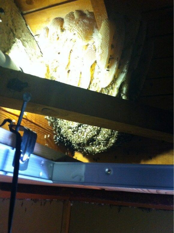 A Simple and Smart Method of Removing a Beehive in Your Attic