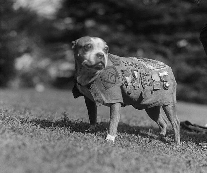 The 24 Most Heroic Animals In History