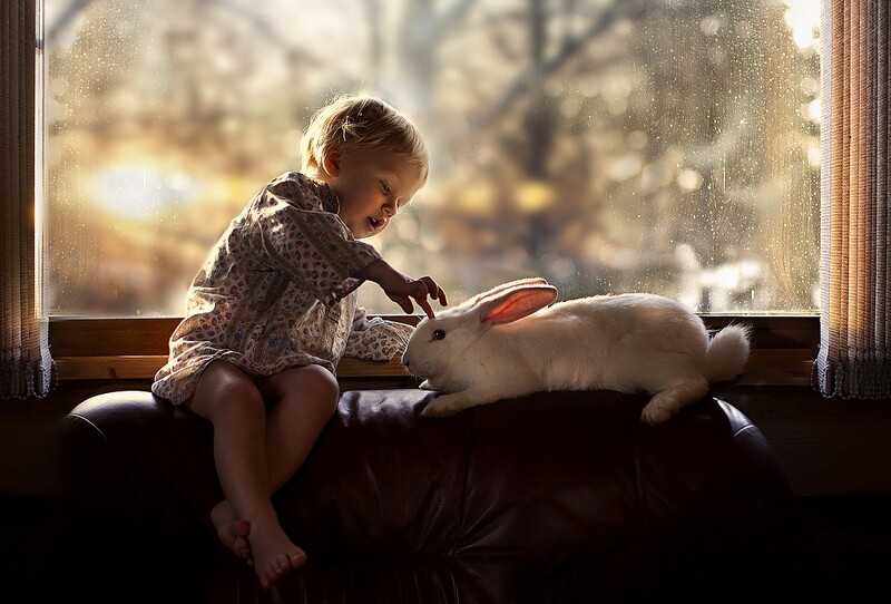 Beautiful photos of baby with farm animals