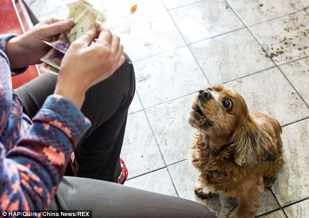 Very clever dog who knows how to spend money
