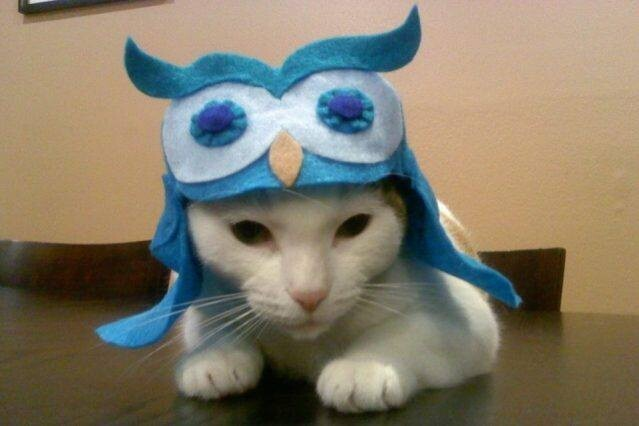Cats in costumes of other animals