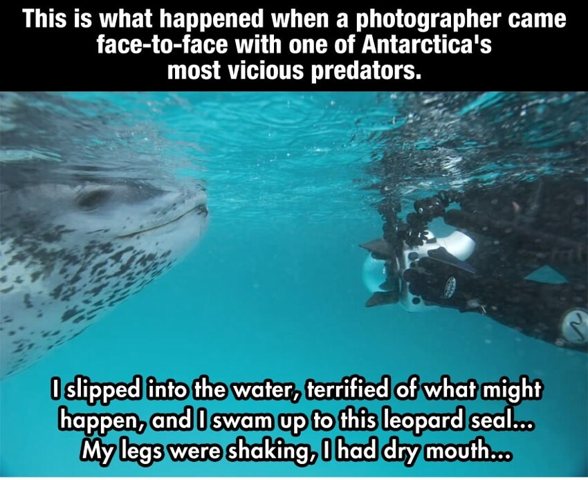 This Terrified Diver Prepares For Death As A Predator Approaches, When