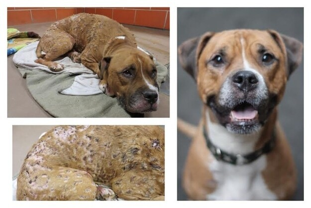12 Amazing Before-And-After Pictures Of Rescue Dogs