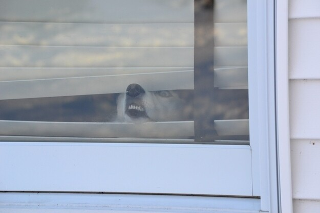 19 Dogs Who Have A Severe Case Of Window Face