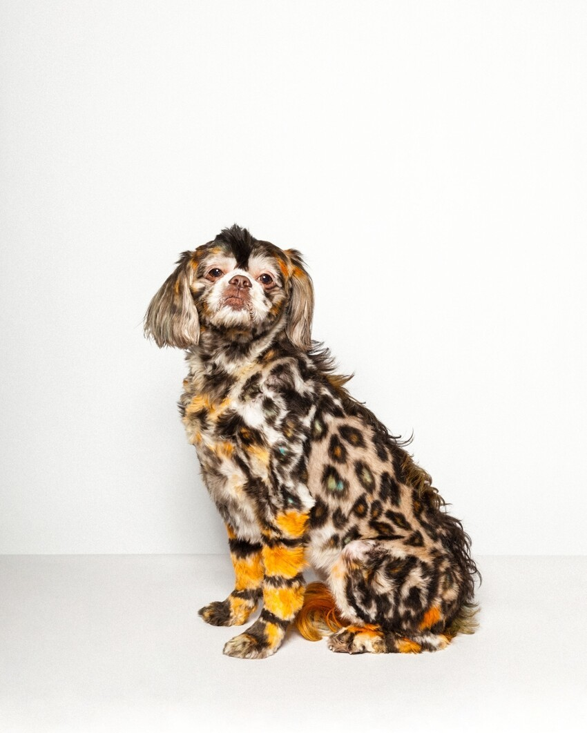 These Pictures Prove The World Of Top Dog Grooming Is Really Quite Biz